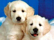 Puppy Bowl XIII